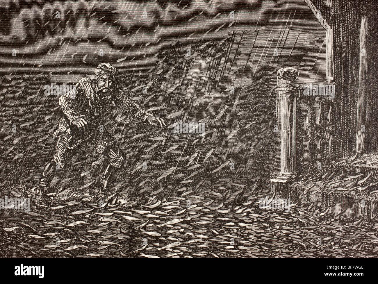A shower of fish in Transylvania, Romania - Stock Image