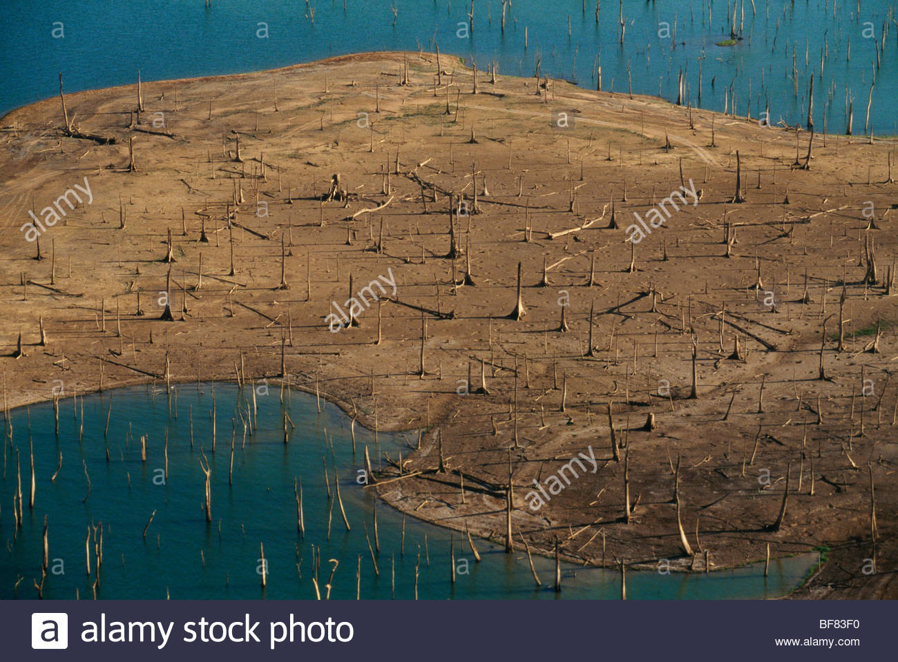 Tree stumps in Panama Canal reservoir exposed by El Nino drought (aerial), Panama - Stock Image