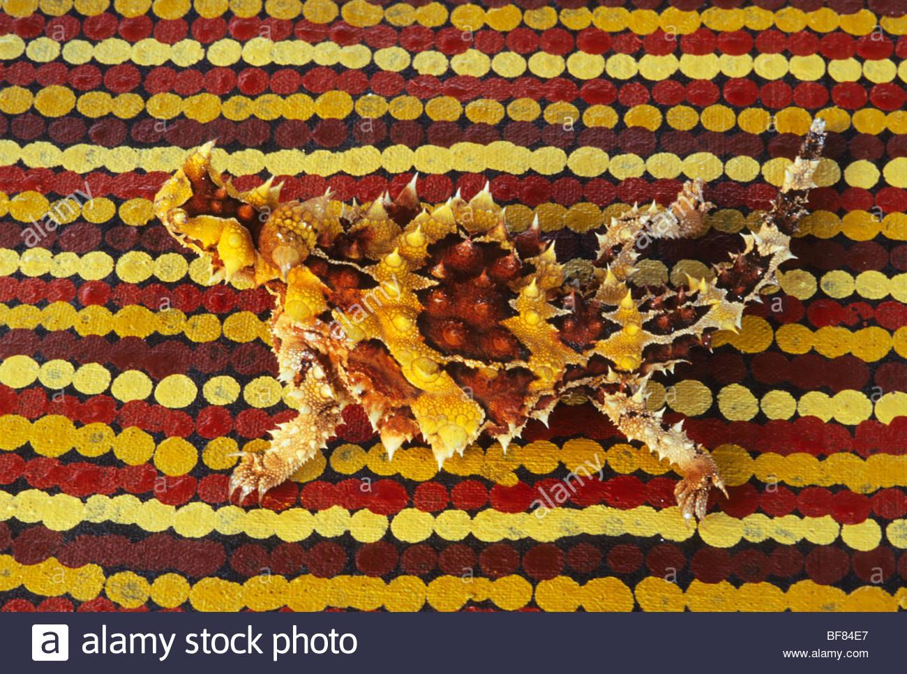 Thorny devil, Moloch horridus, Central Desert, Australia - Stock Image