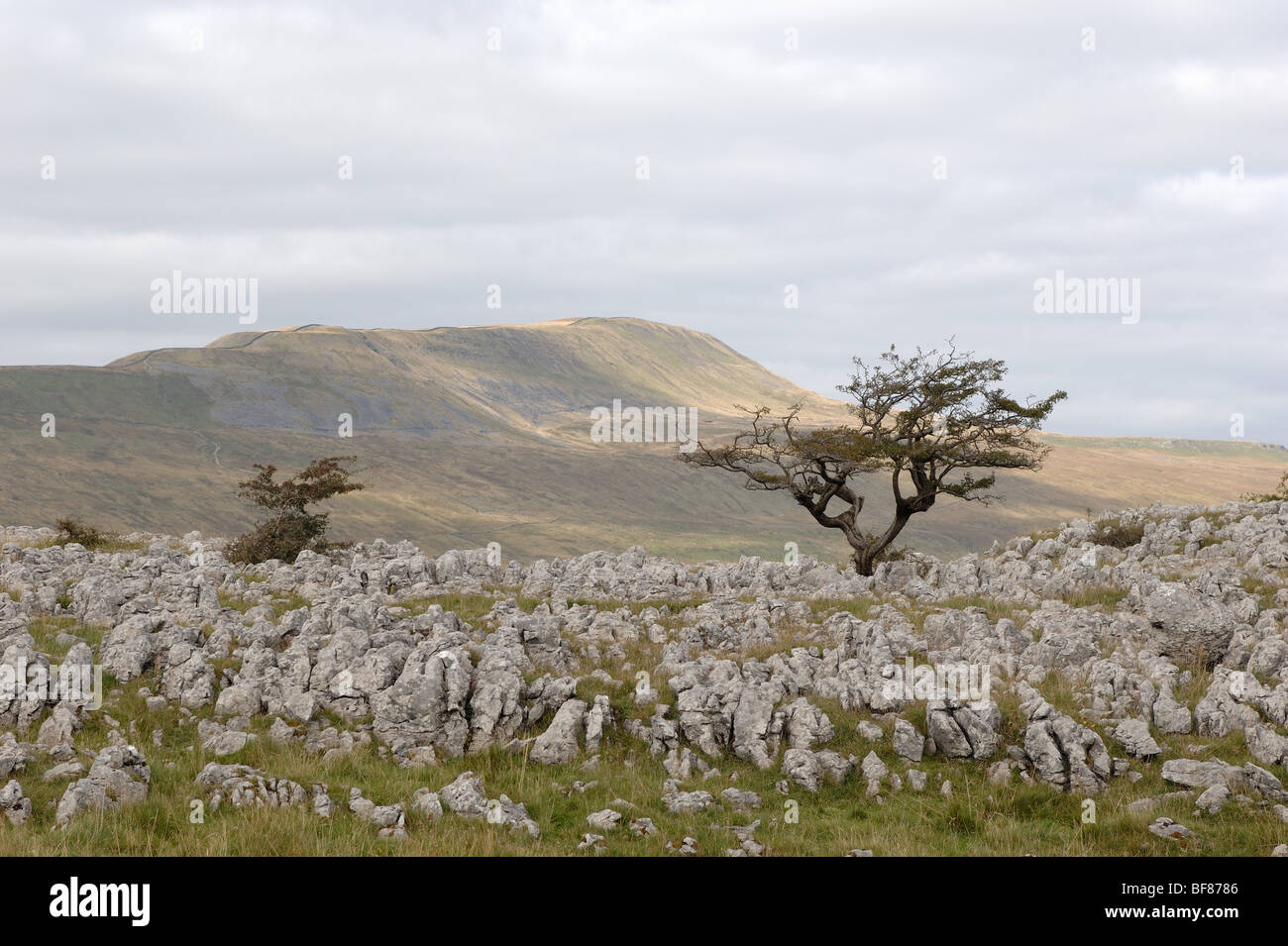 Whernside hill from the path from Chaple le Dale to Ingleborough mountain Yorkshire Dales National Park England - Stock Image