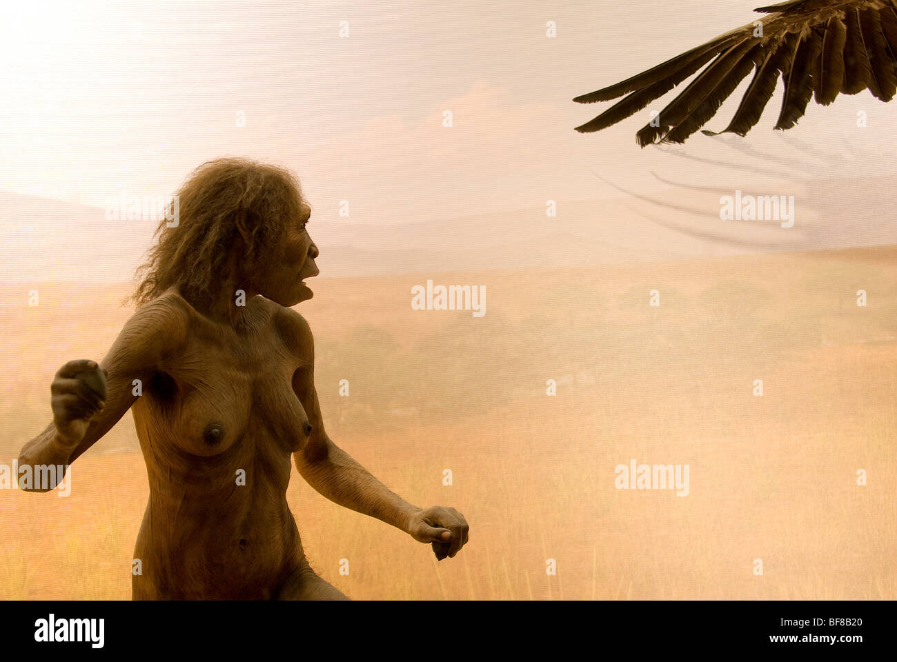 Early Human, Homo Ergaster Diorama, Museum of Natural History, New York City - Stock Image