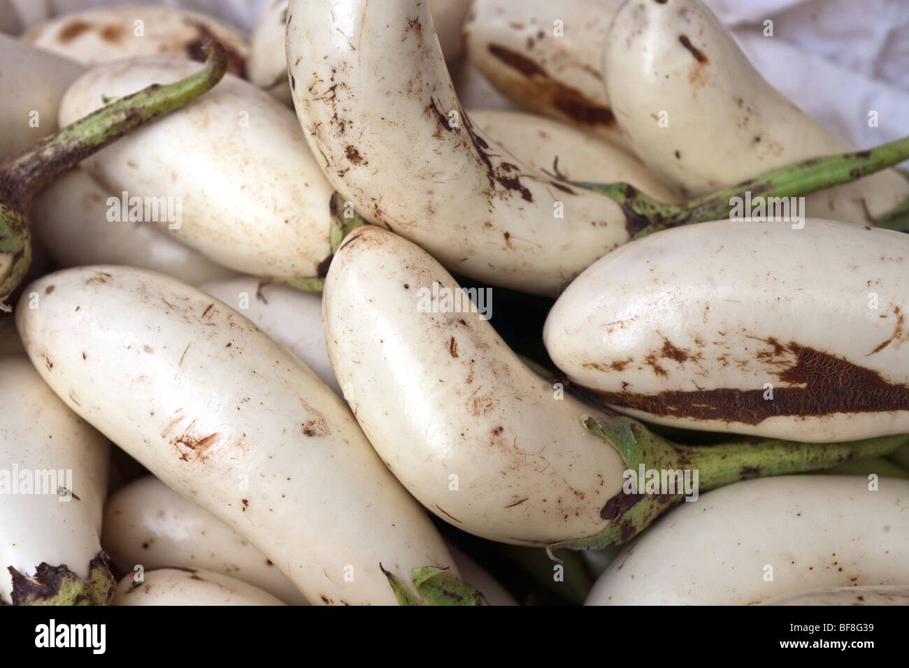 gleaming shapely healthy raw beautiful white eggplant displayed for sale at Union Square farmers green market in - Stock Image