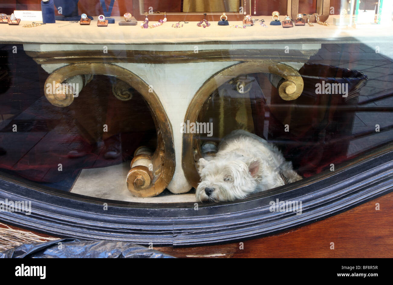 Dog in shop window, Lugano, Ticino - Stock Image