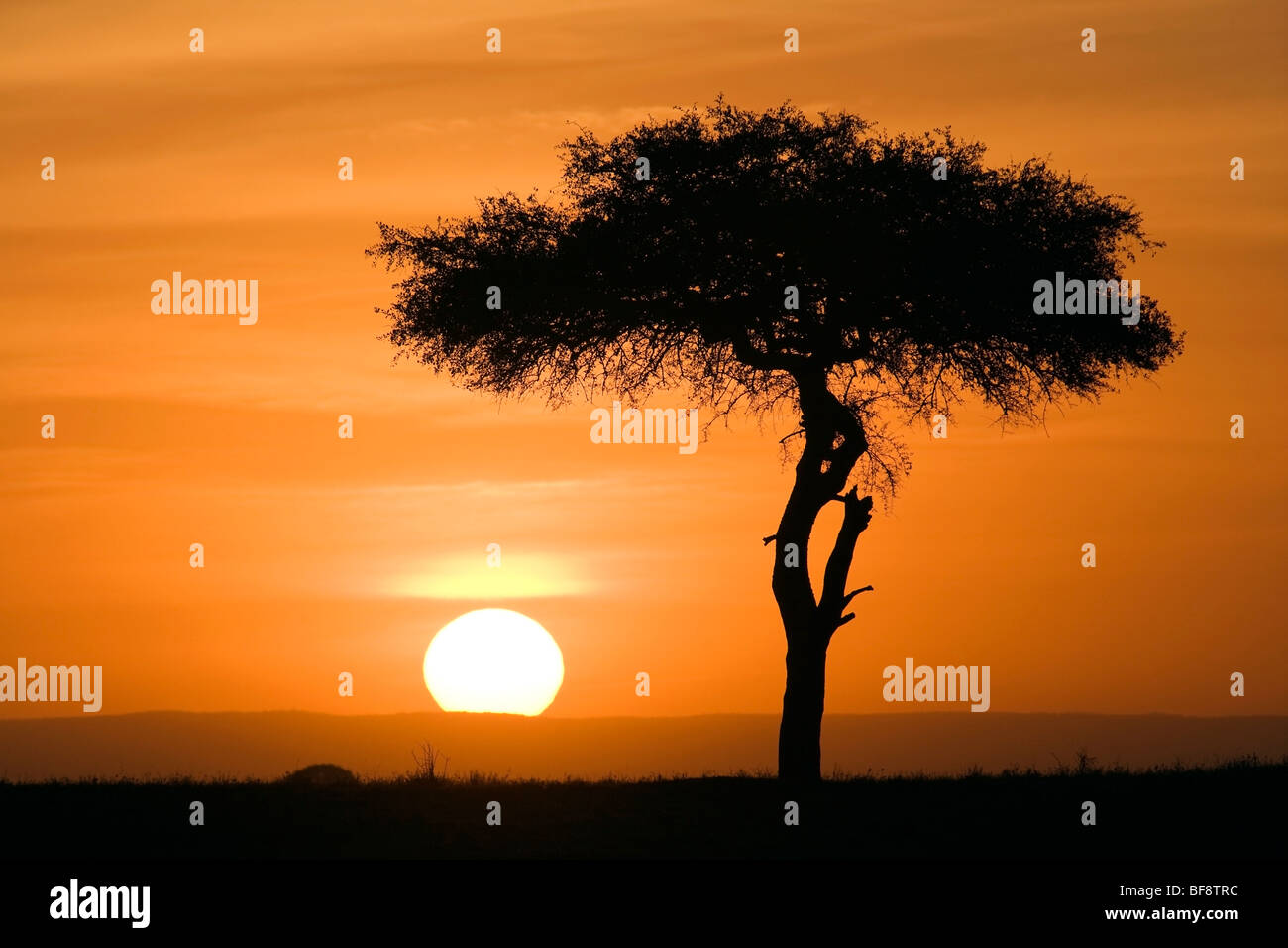 Sunset in the Mara - Masai Mara National Reserve, Kenya - Stock Image