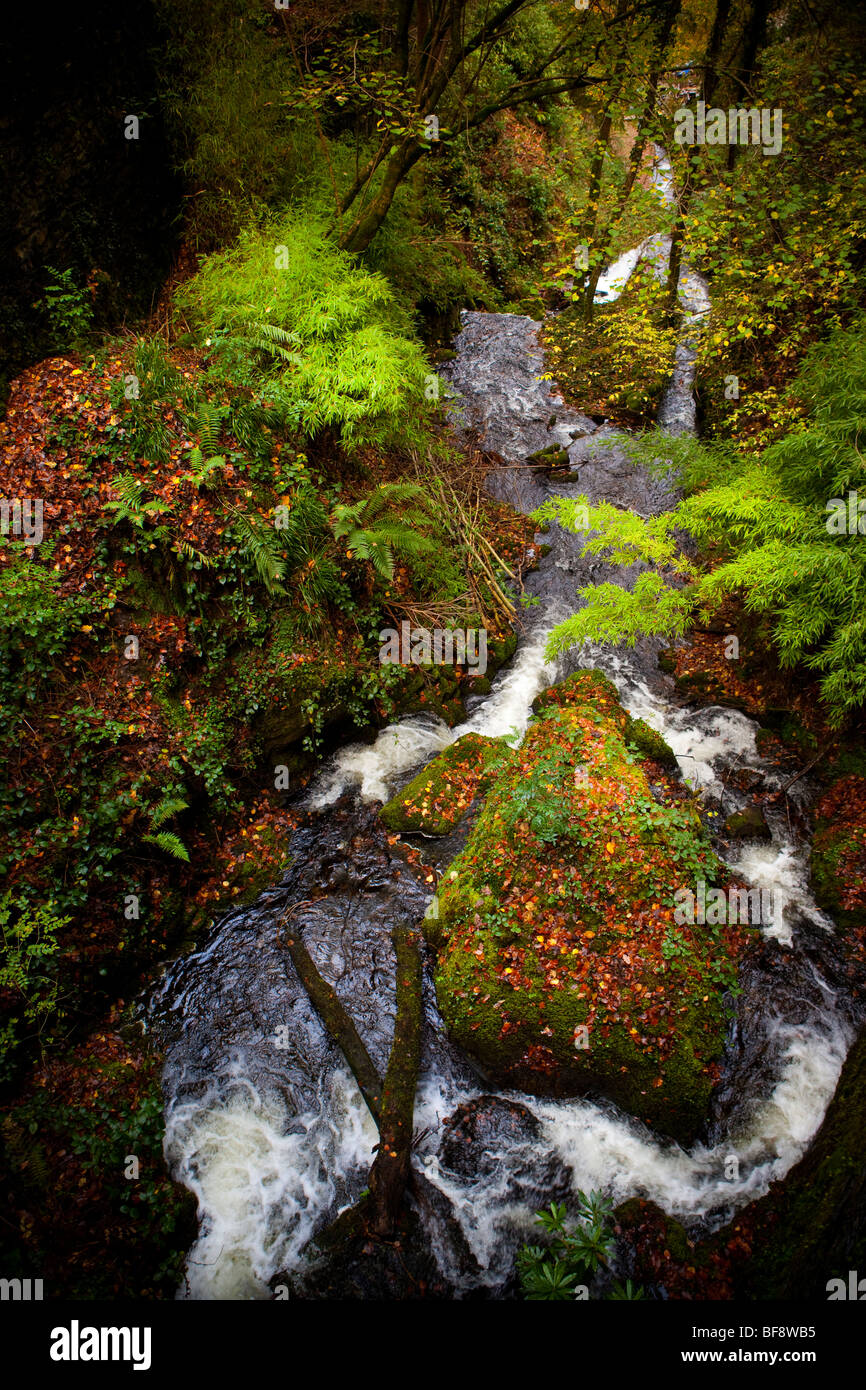 North Wales Snowdonia Autumn colourful stormy colorful landscape nature waterfall with moss and ferns Stock Photo