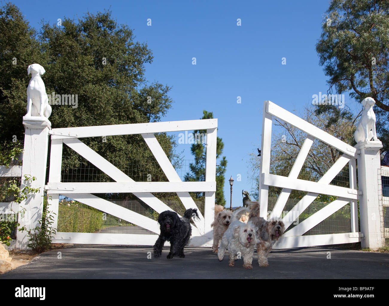 dogs dog escaping gates lost - Stock Image