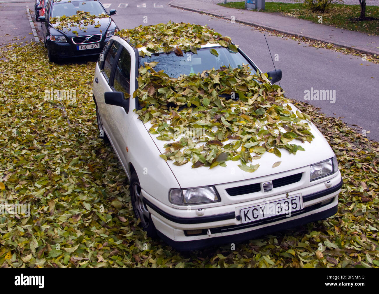 Parked car covered with leaves under a tree by autumn in Sweden. - Stock Image