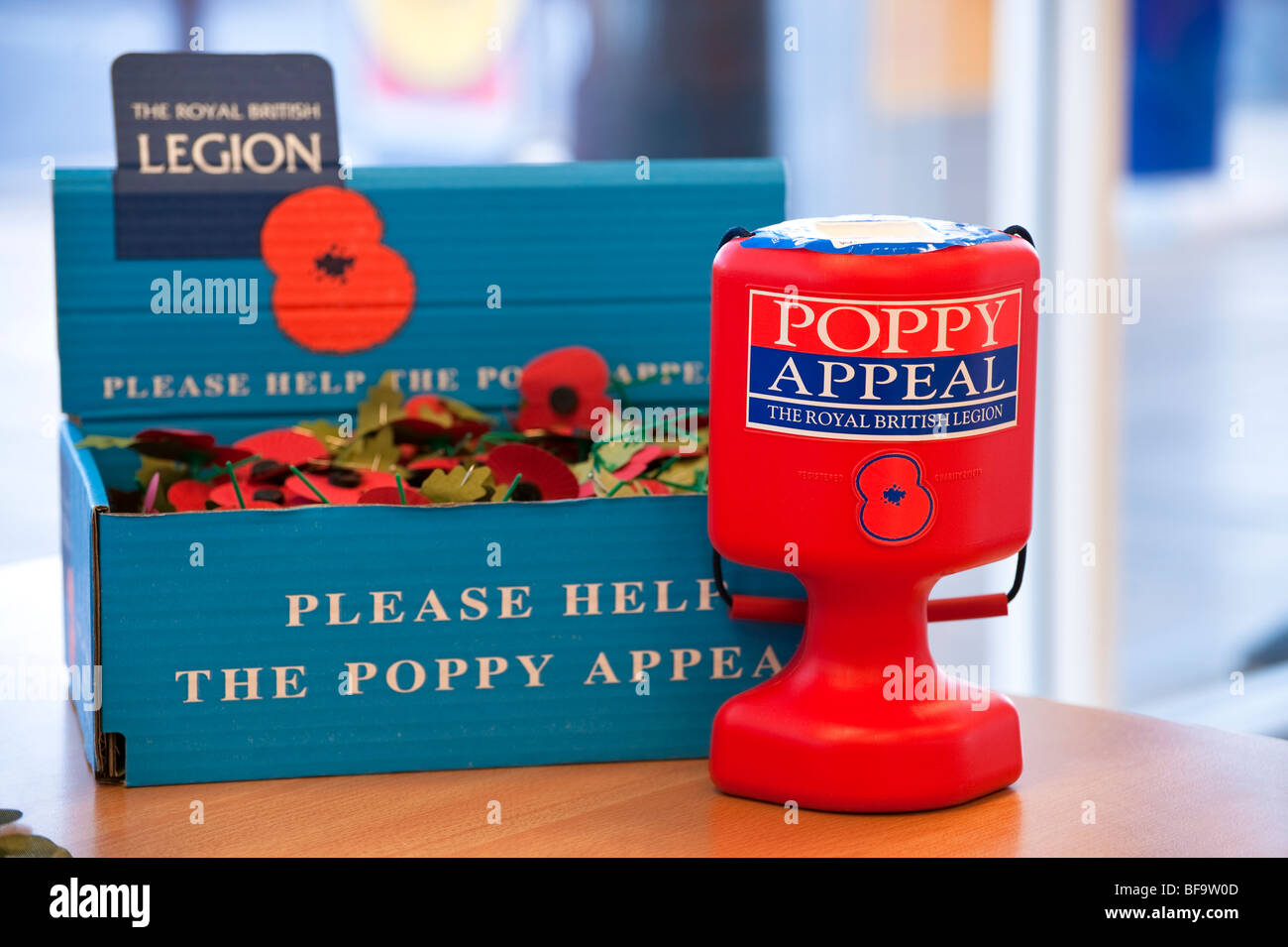 The Royal British Legion poppy appeal. Collection box full of red poppies. Charity tin taking money for ex-servicemen. - Stock Image