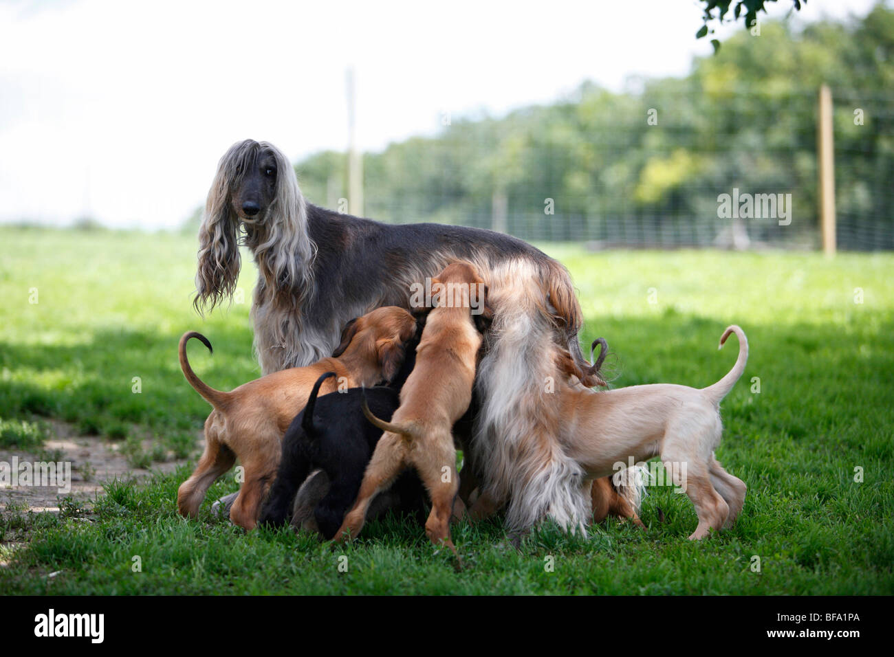 Dog Nursing Baby Animals Stock Photos & Dog Nursing Baby