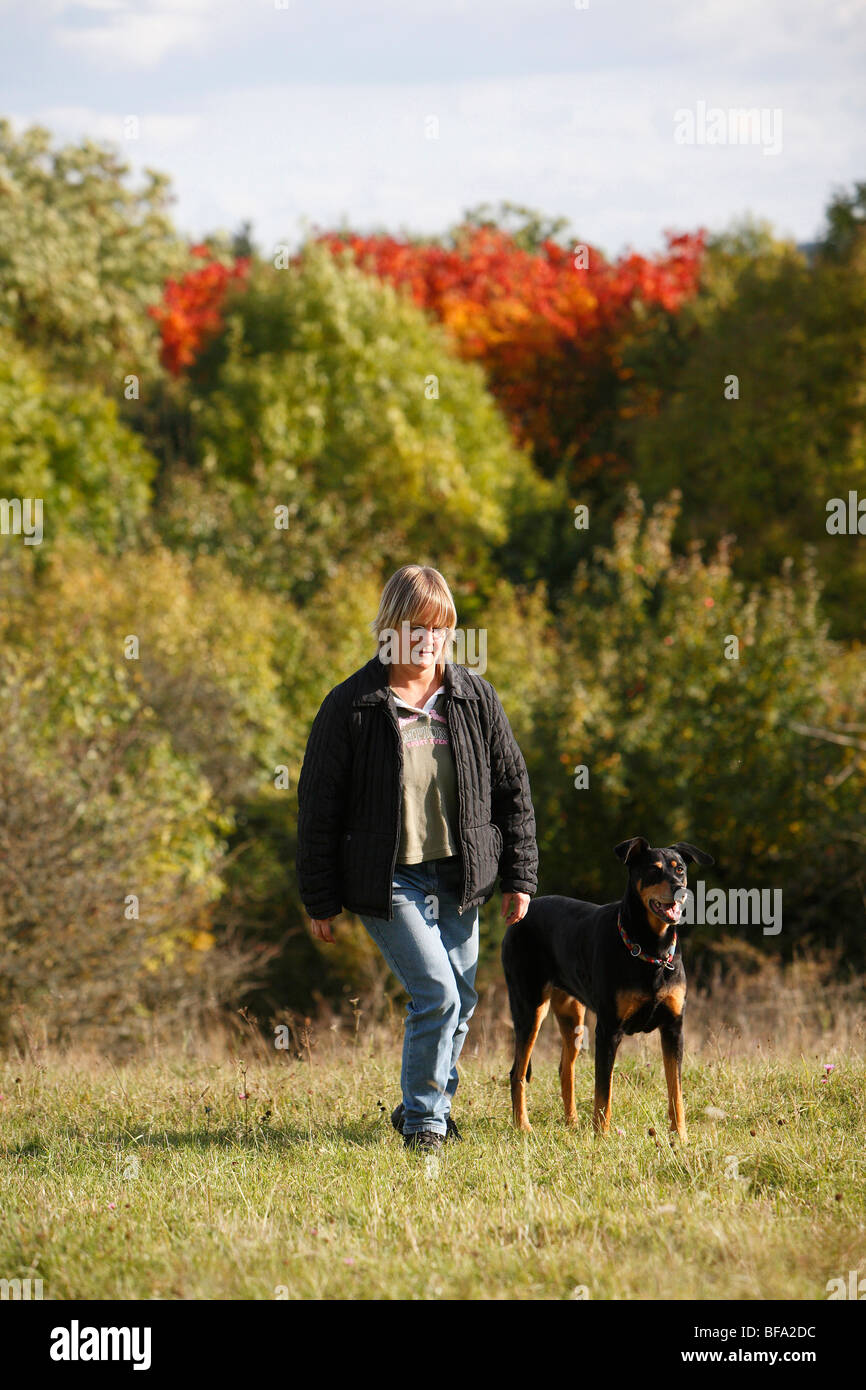 mixed breed dog (Canis lupus f. familiaris), woman walking over a meadow with a ten years old female Dobermann-mixed - Stock Image