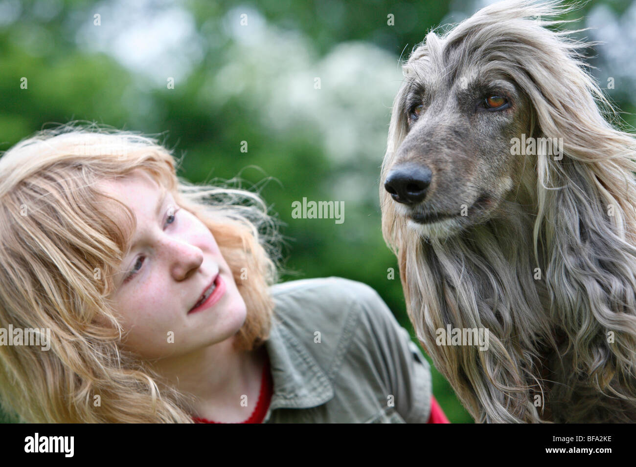 Afghanistan Hound, Afghan Hound (Canis lupus f. familiaris), girl with his dog, their long hair blowing in the wind Stock Photo