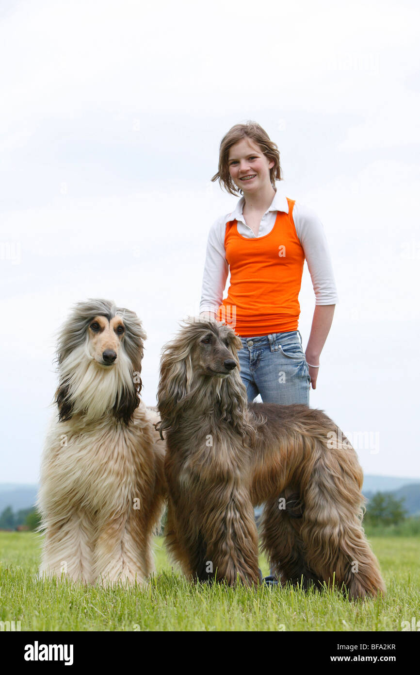 Afghanistan Hound, Afghan Hound (Canis lupus f. familiaris), girl with their two dogs in a meadow, Germany Stock Photo