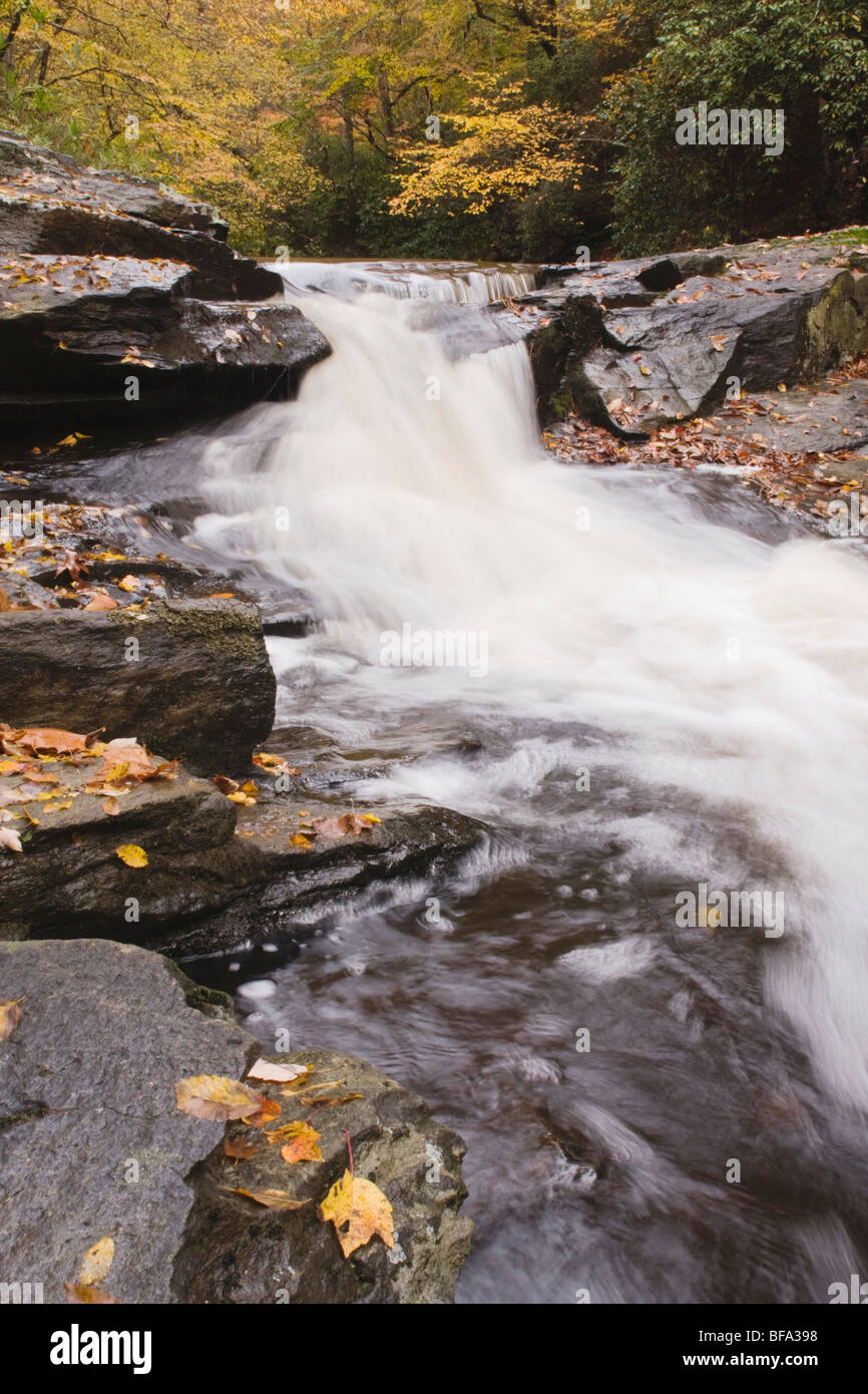 Fall leaves on rock and stream, Raven Rock State Park, Lillington, North Carolina, USA Stock Photo