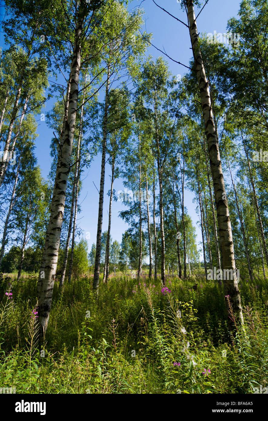 summer of Sweden - Stock Image
