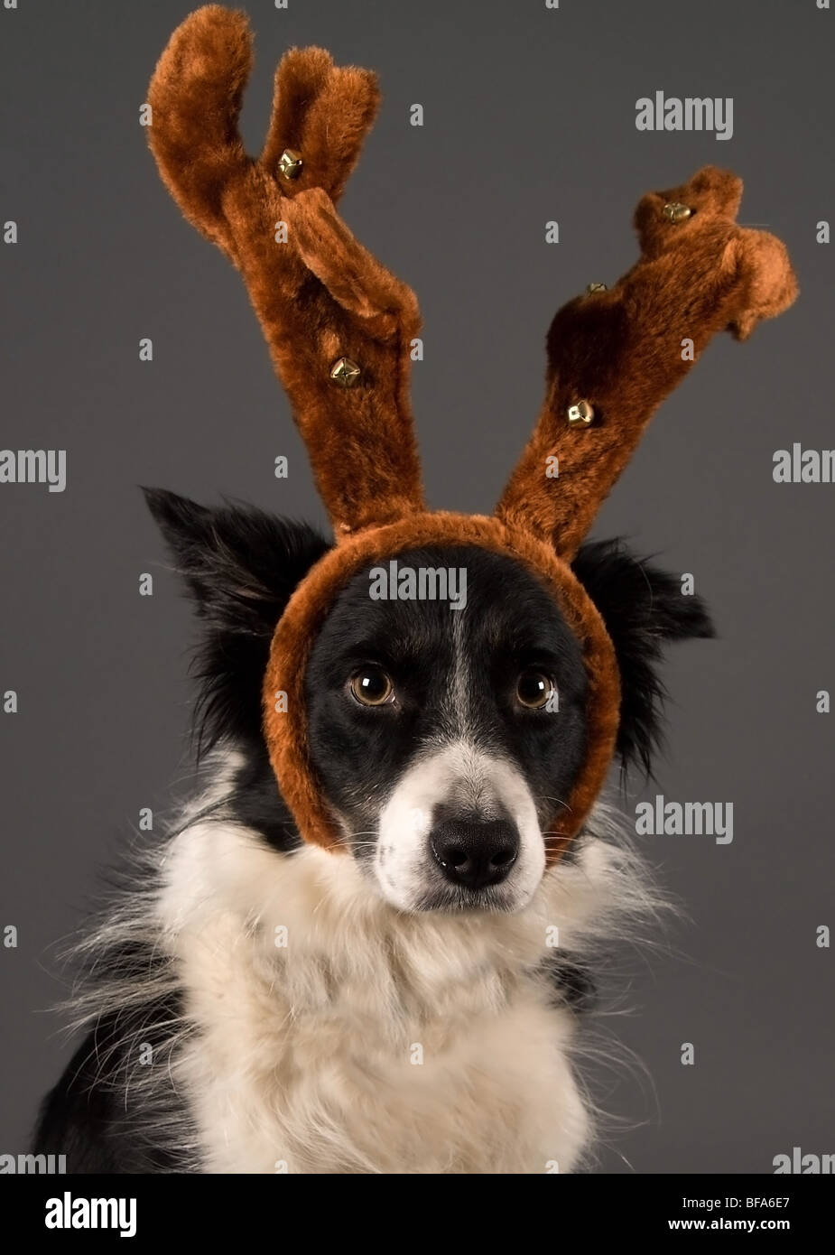 Santas helper - Stock Image