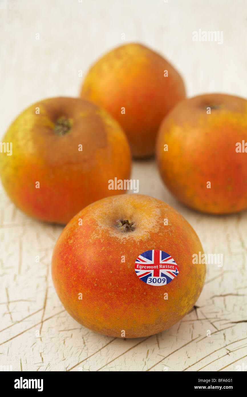 Egremont Russet Apple labeled in English using Union Jack flag design laying on painted distressed wood background - Stock Image