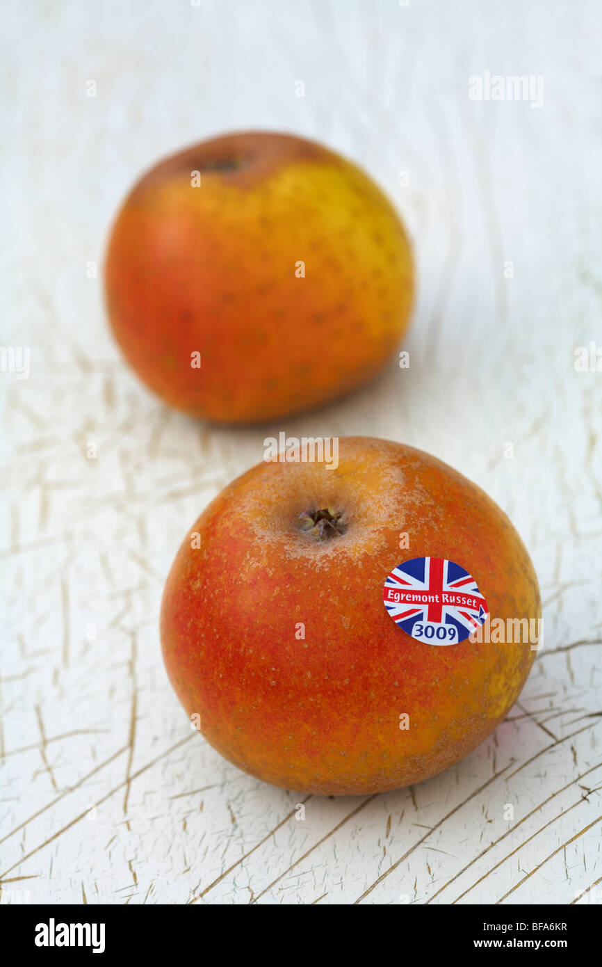 Egremont Russet Desert Apple Variety Malus Domestica laying on old painted wood background - Stock Image