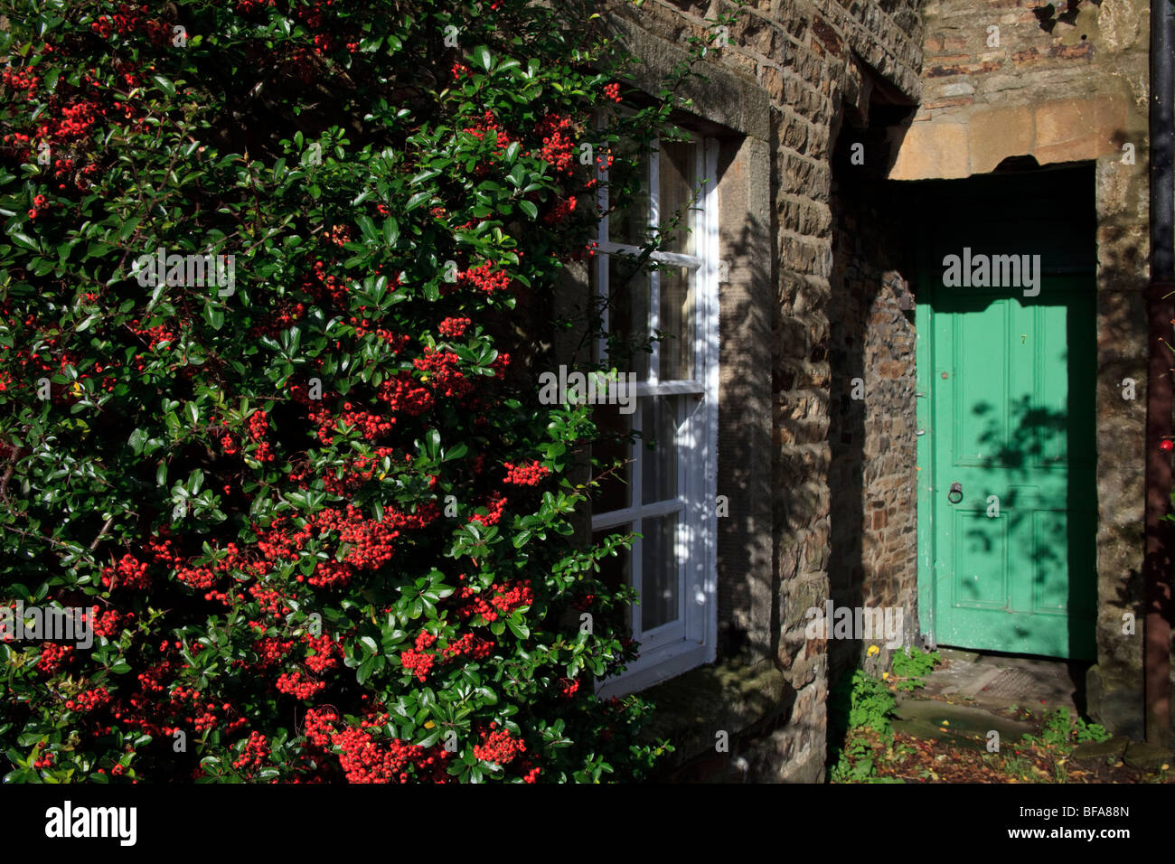 Stone cottage with a green door with shrub complete with red berries situated in Reeth Swaledale Yorkshire - Stock Image