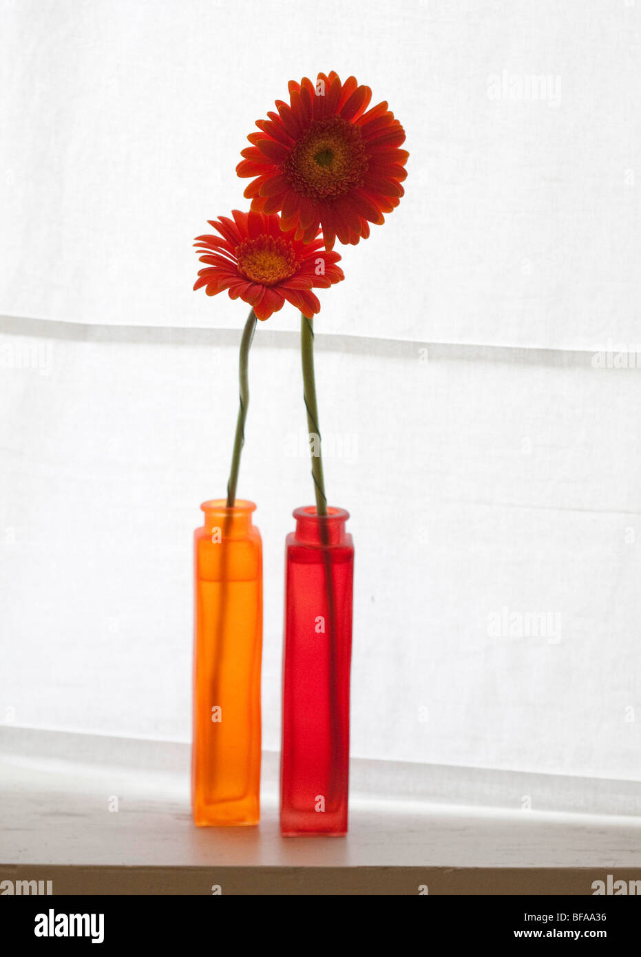 Gerberas in a flower vase. Stock Photo