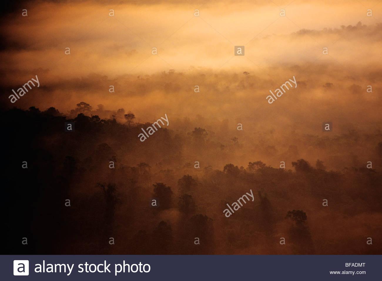 Sunrise over rainforest (aerial), Cockscomb Basin, Belize Stock Photo