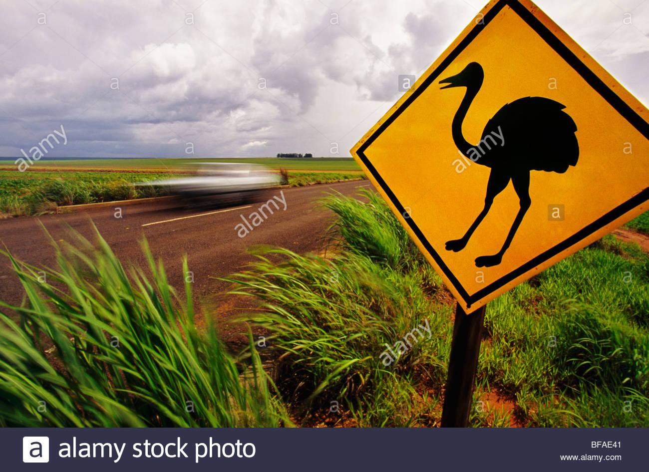 Road sign warning of rheas crossing near Emas National Park, Goias State, Brazil - Stock Image