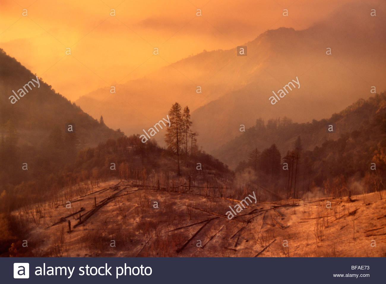 Burned landscape after forest fire, Big Sur, California - Stock Image