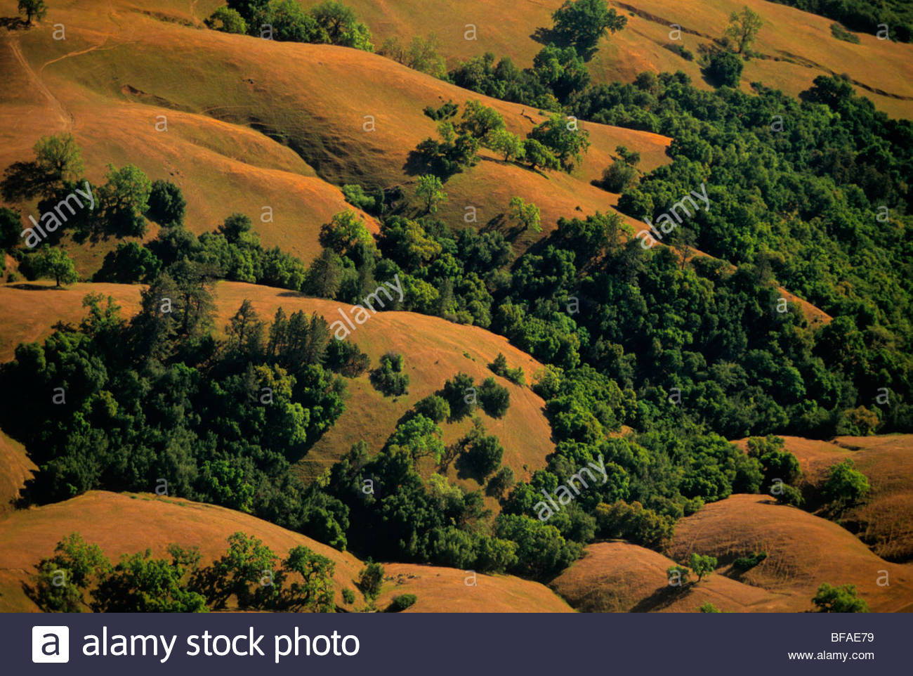 Oak woodland and hills (aerial), Big Sur, California - Stock Image
