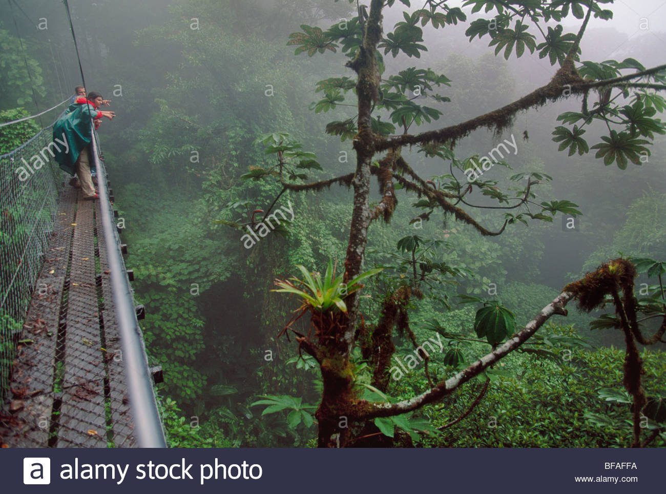 Bird watchers on canopy walkway, Monteverde Cloud Forest Preserve, Costa Rica - Stock Image