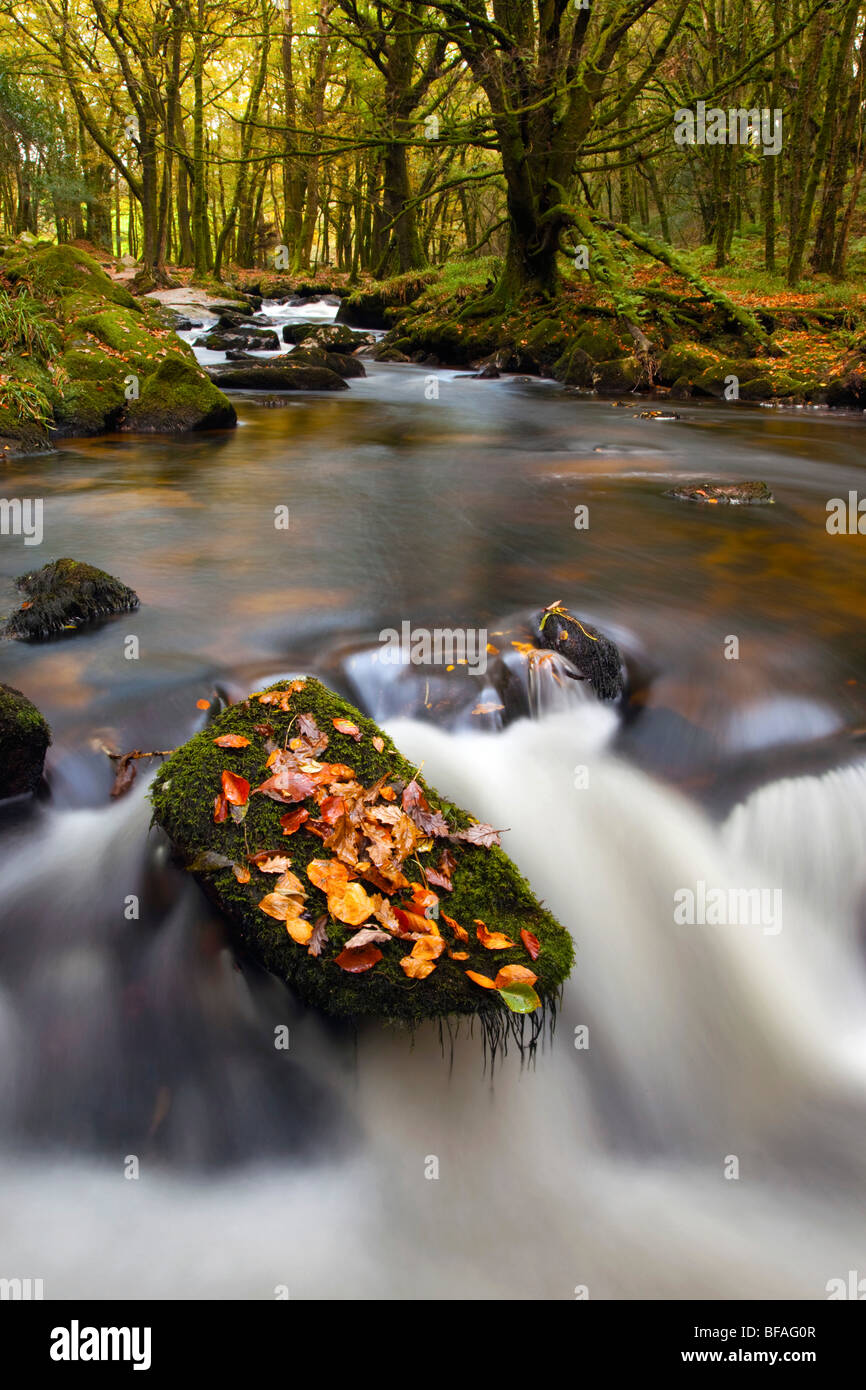 Golitha Falls and the River Fowey; Cornwall - Stock Image