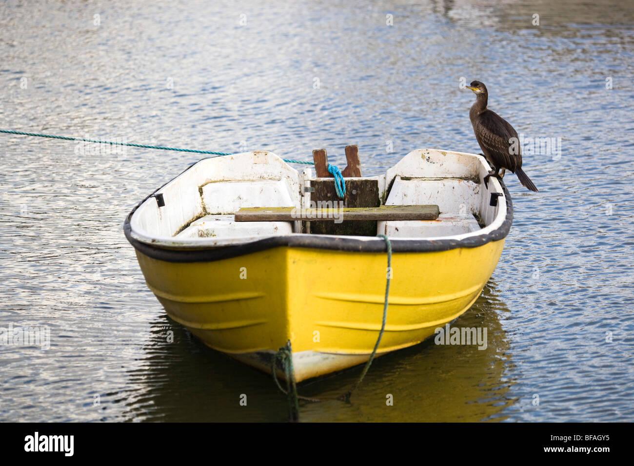 Shag; Phalacrocorax aristotelis; juvenile on boat; cornwall - Stock Image