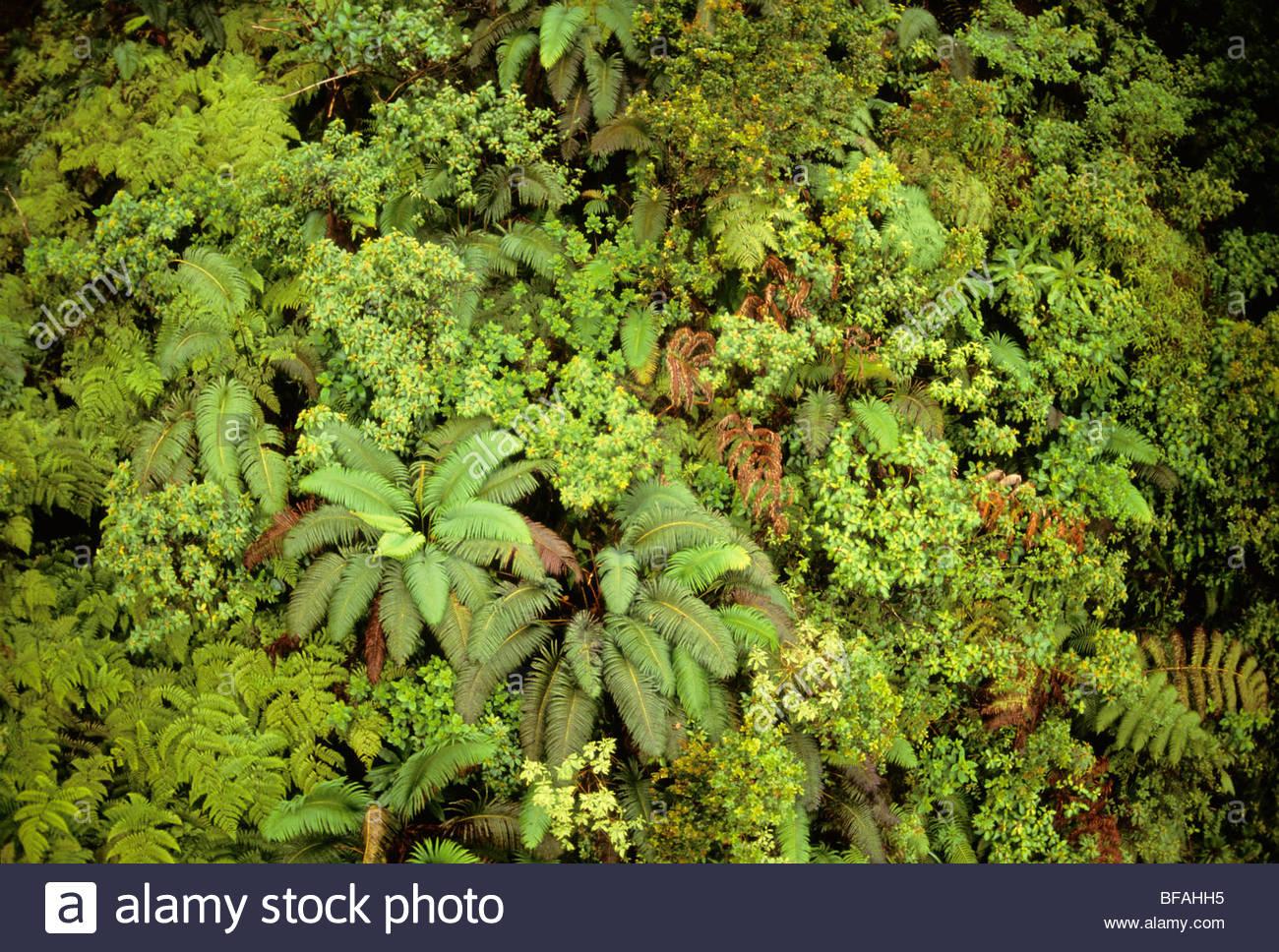 Ferns and other forest vegetation, Wai Ale Ale, Kauai, Hawaii - Stock Image