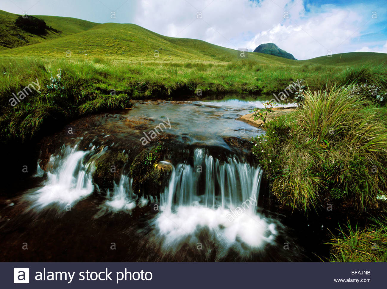 Stream in alpine grassland, Eravikulum National Park, Western Ghats, India - Stock Image