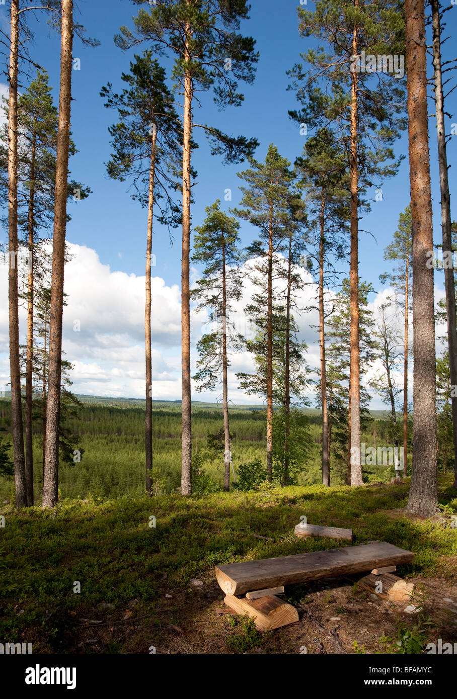 Log seat  at a hiking route in Finnish pine ( pinus sylvestris ) forest , Finland - Stock Image