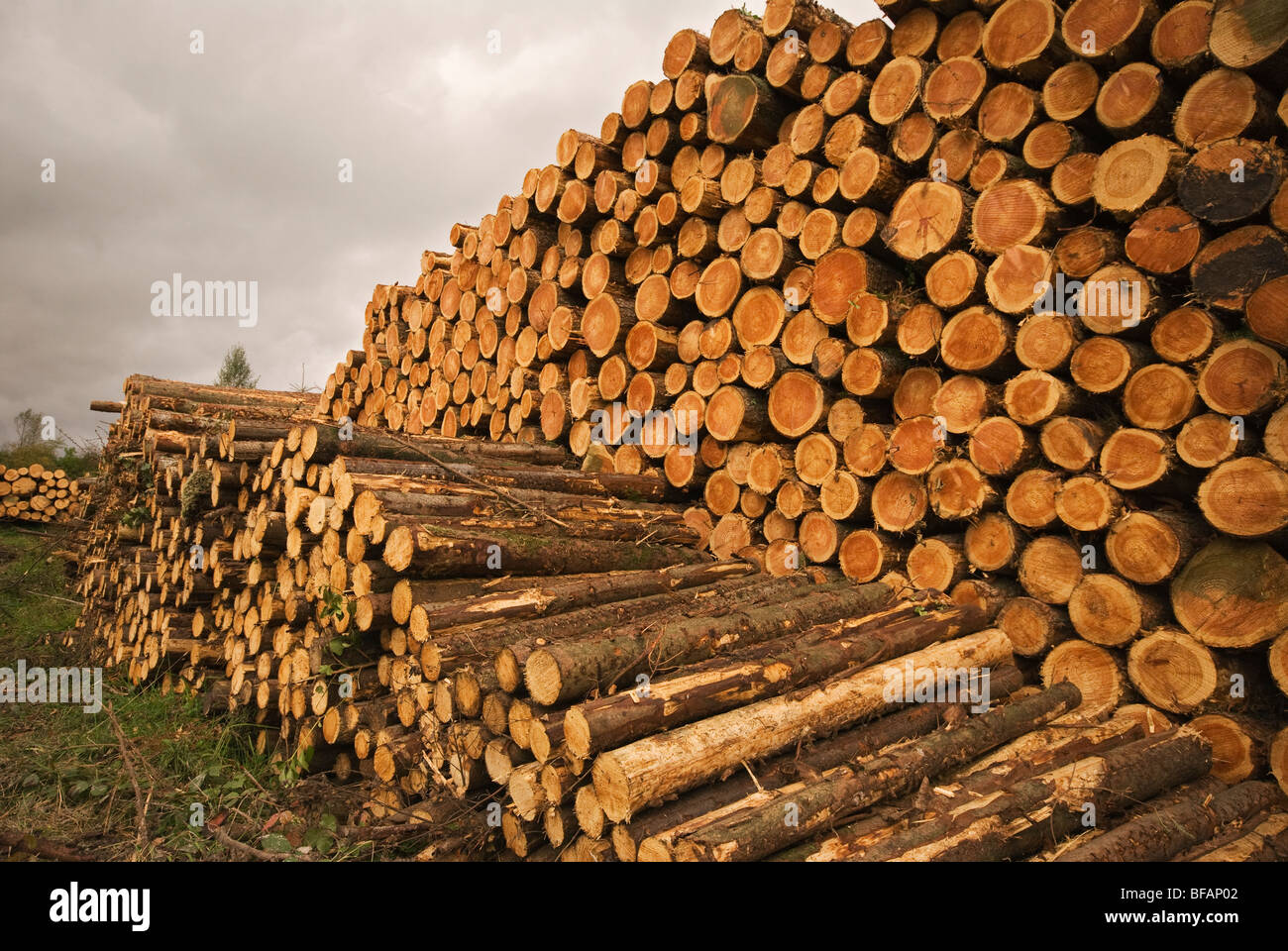 Stacked timber, Co Waterford, Eire - Stock Image