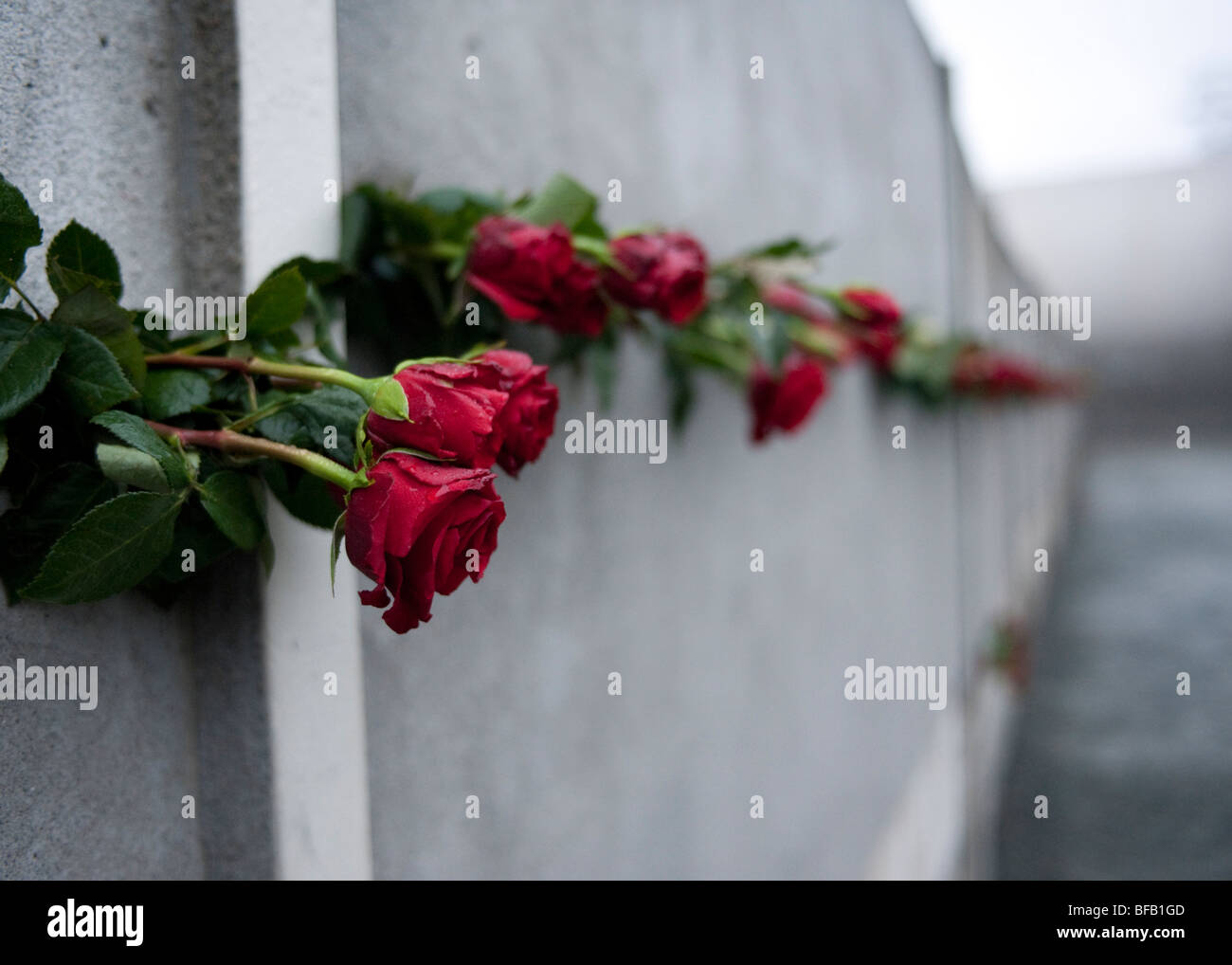 red roses in Berlin Wall on 20th anniversary of the fall of the wall to commemorate those who died trying to escape - Stock Image