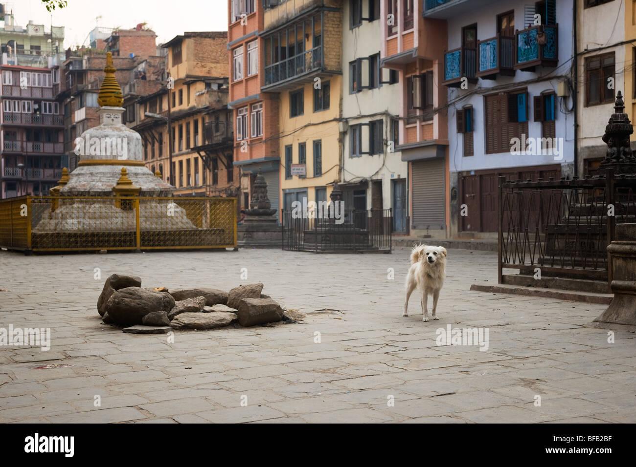 Dog in the yard.  Kathmandu. Nepal - Stock Image