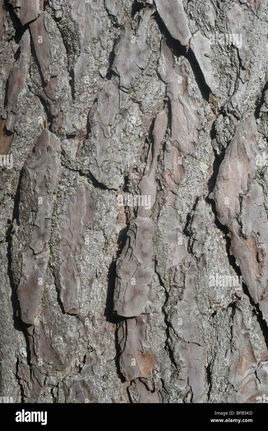 Bark - John Gollop - Stock Image