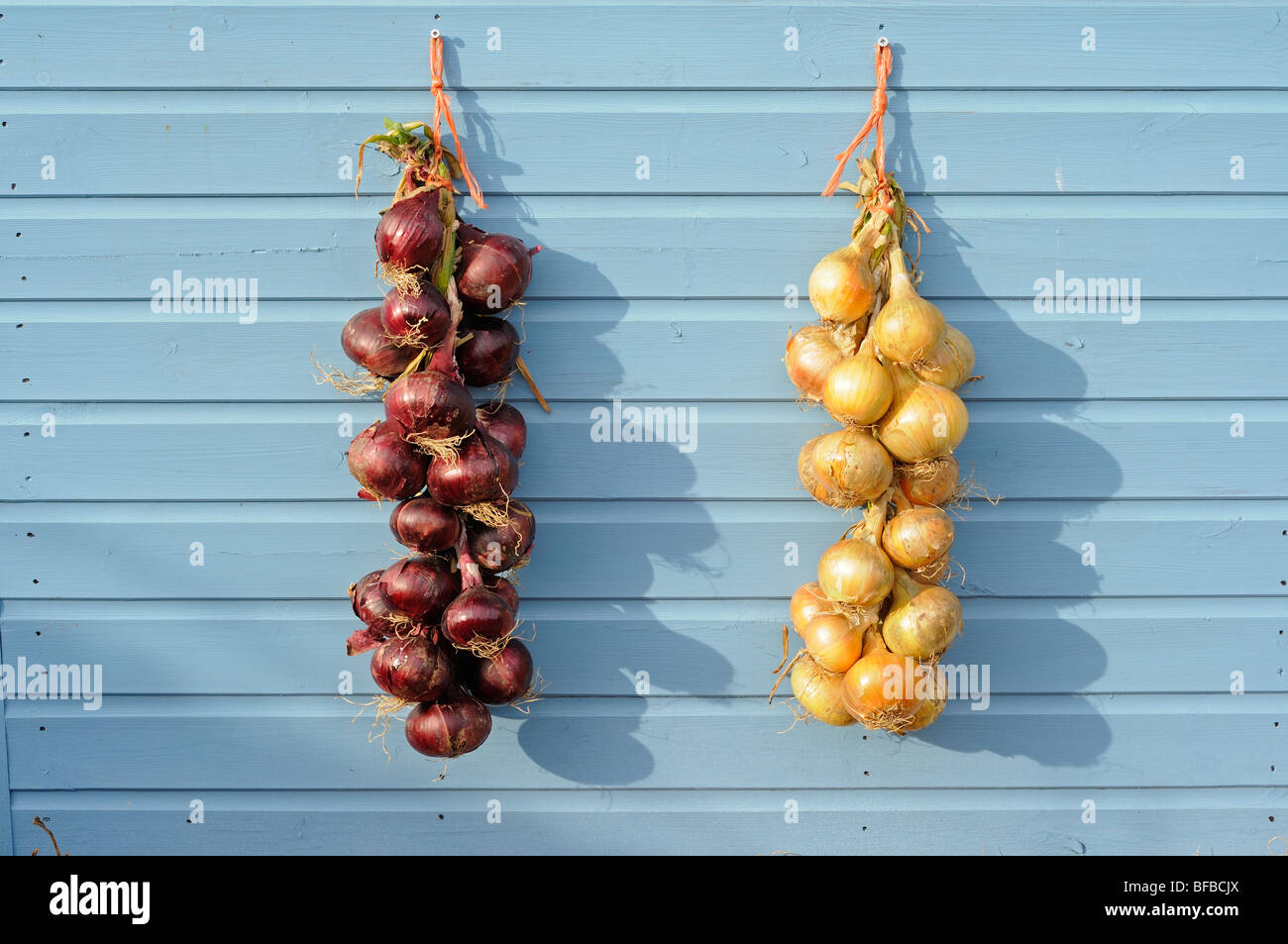 Braided Onions Stock Photos & Braided Onions Stock Images - Alamy