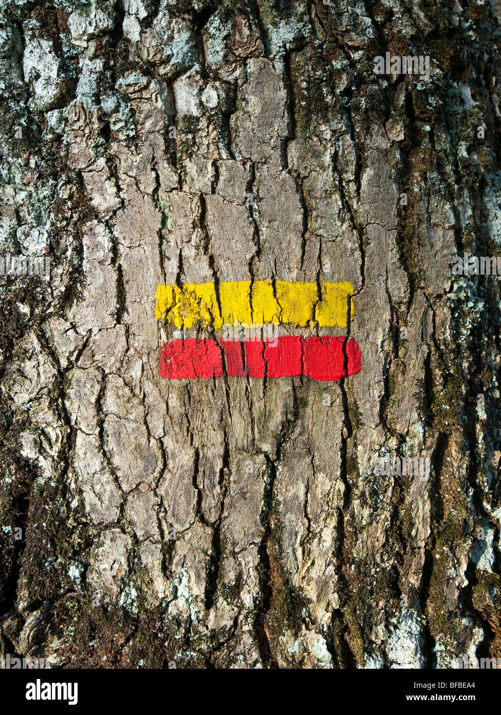 Public footpath right-of-way markers on Oak tree trunk - France. - Stock Image
