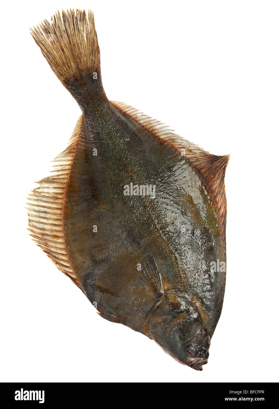 Raw fresh flatfish fish detail on white - Stock Image