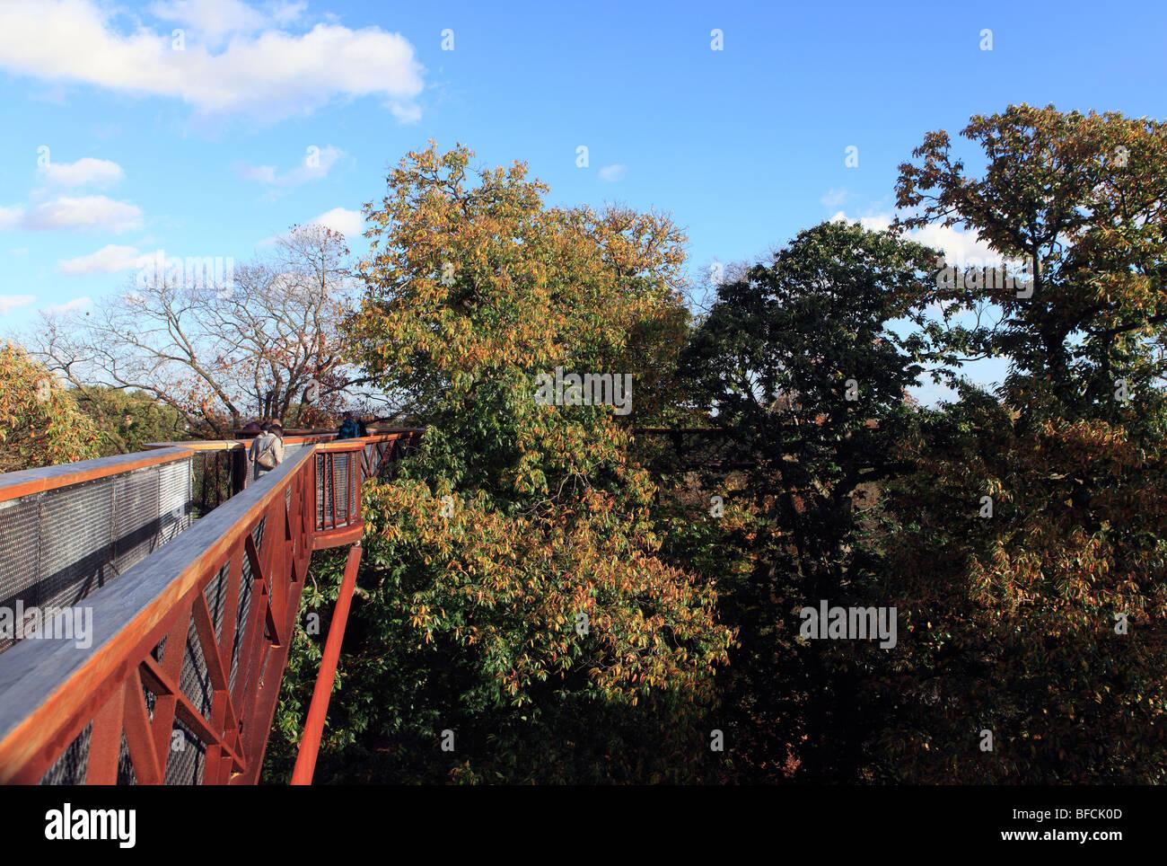 united kingdom west london kew gardens the rhizotron and xstrata treetop walkway - Stock Image