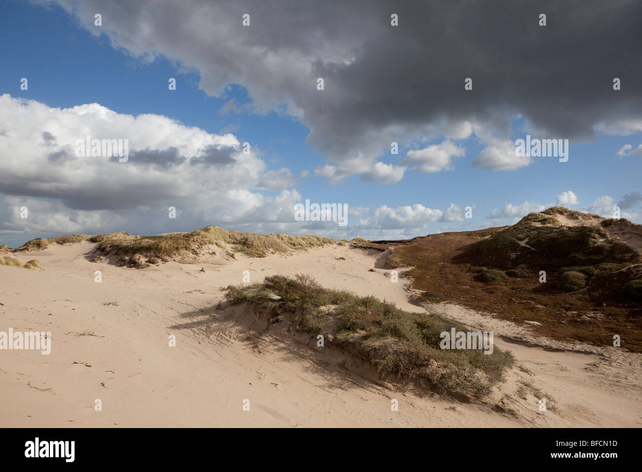 Dunes in Holland - Stock Image