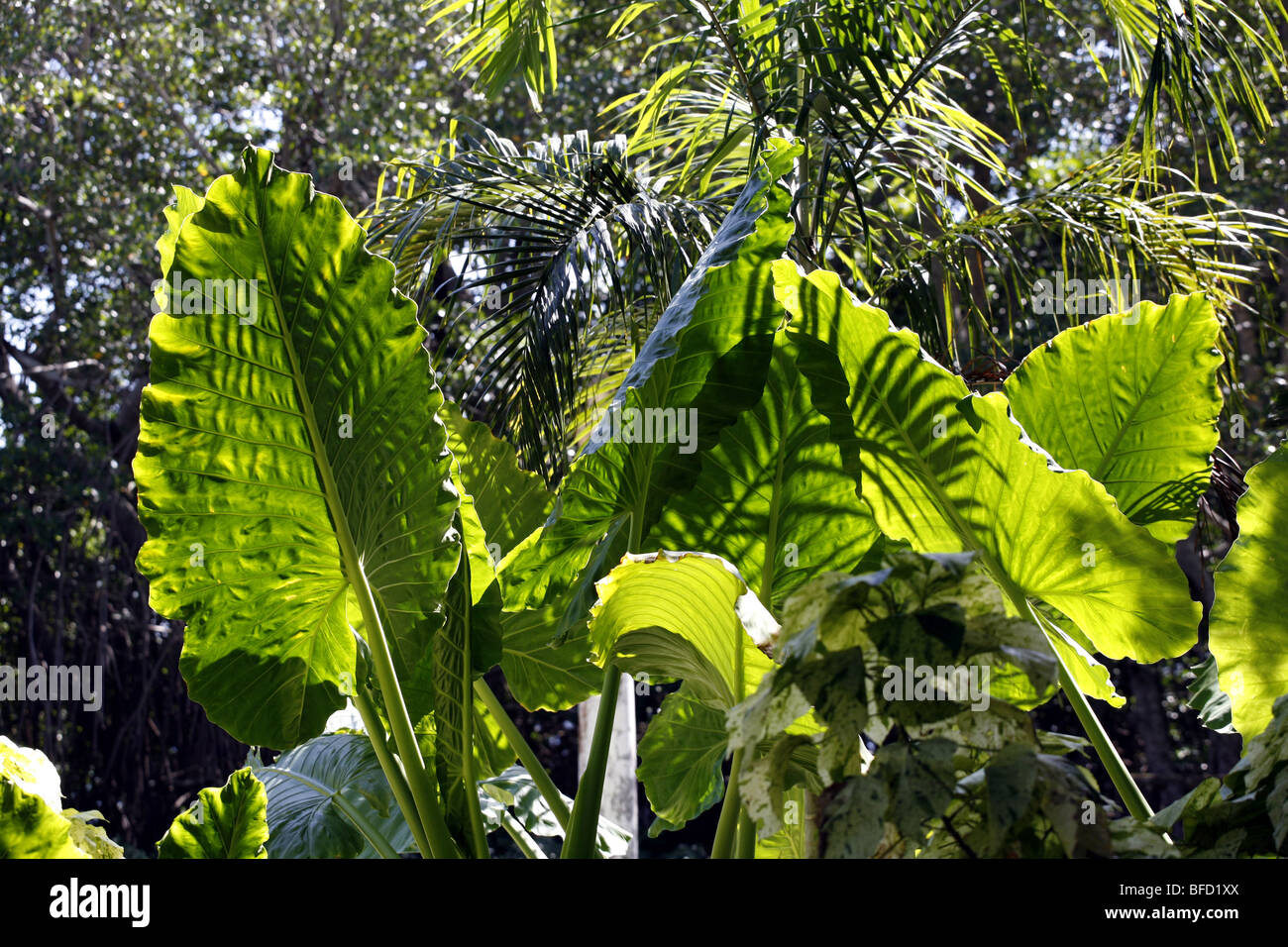 Tropical vegetation and leaves Stock Photo