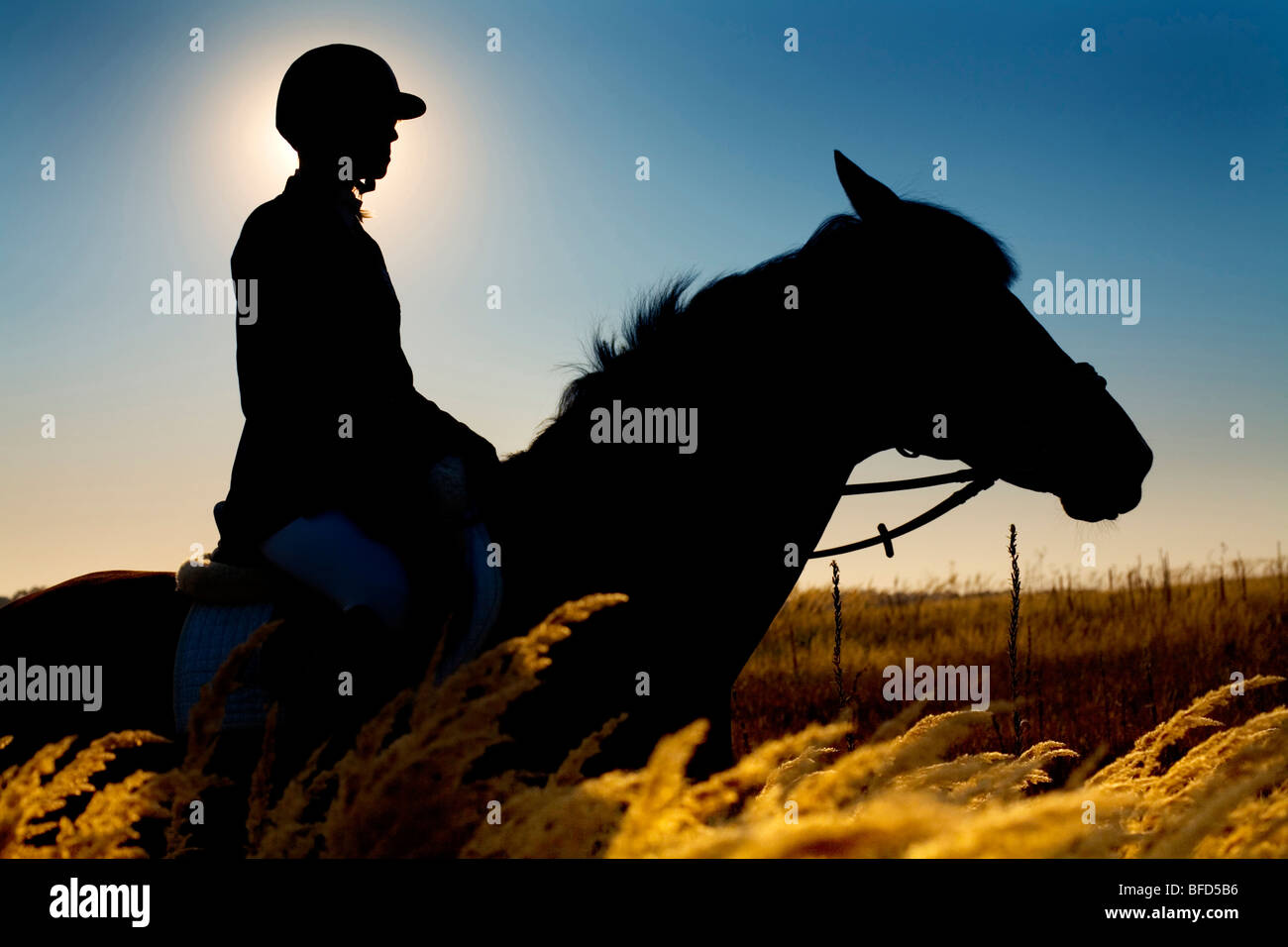 Jockey and horse silhouettes in the field in summer time - Stock Image