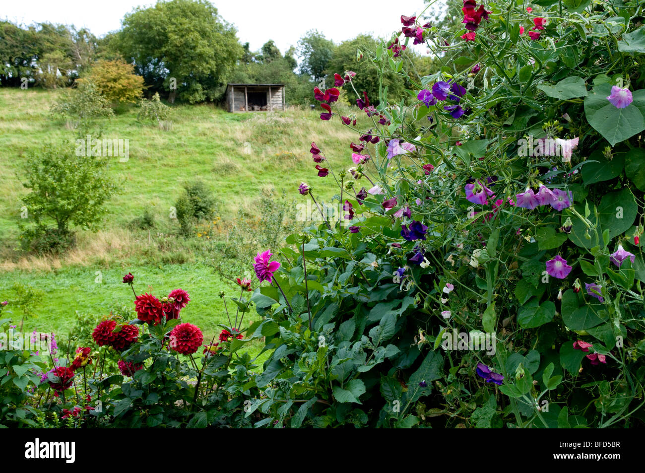 Hanham Court Gardens, Cotswolds. Summer flowers with field and wooden shelter in the distance. - Stock Image