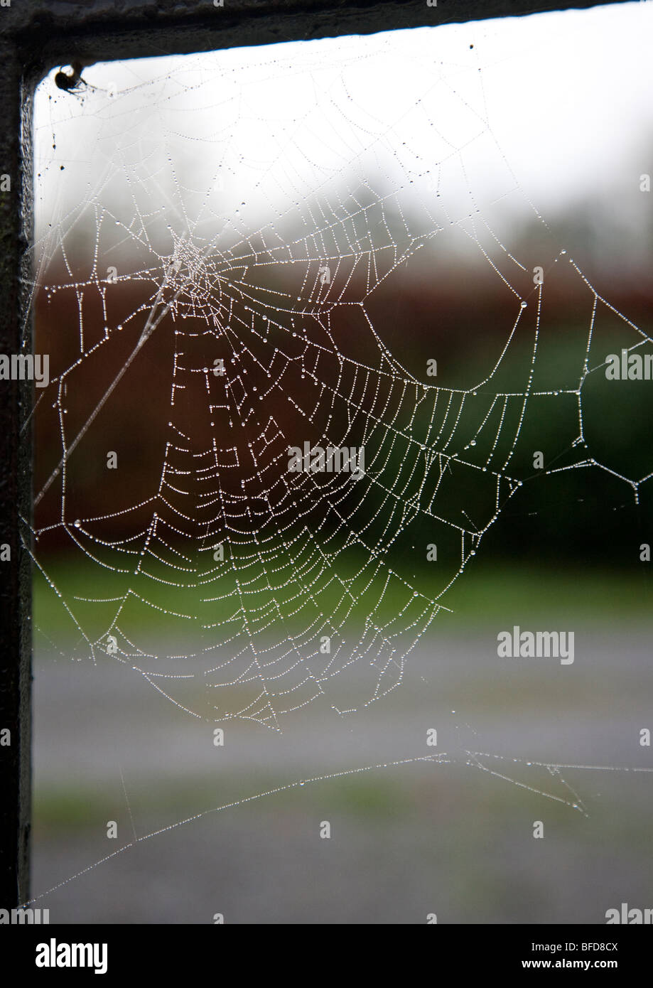 Spider's Web in soft light, Ireland - Stock Image