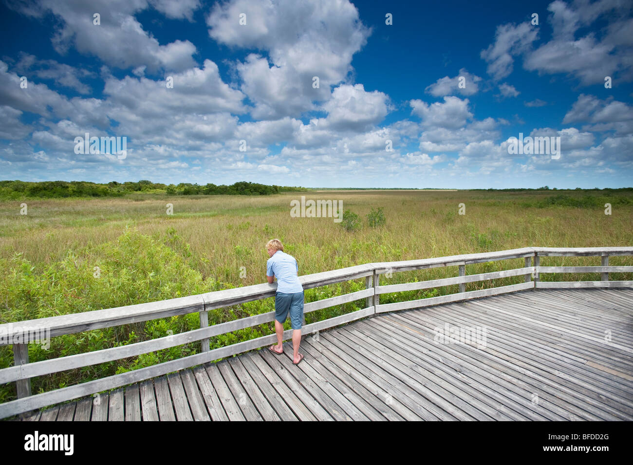 A man pauses during a hike to lean against a wooden railing in Everglades National Park, Florida. - Stock Image