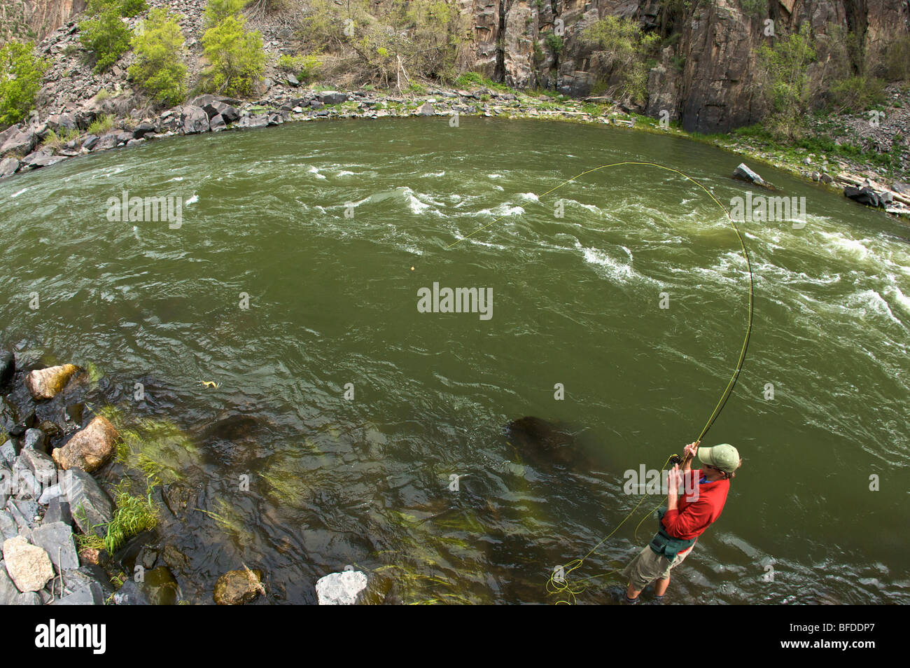 An angler hooks a fish on a river in Colorado. - Stock Image