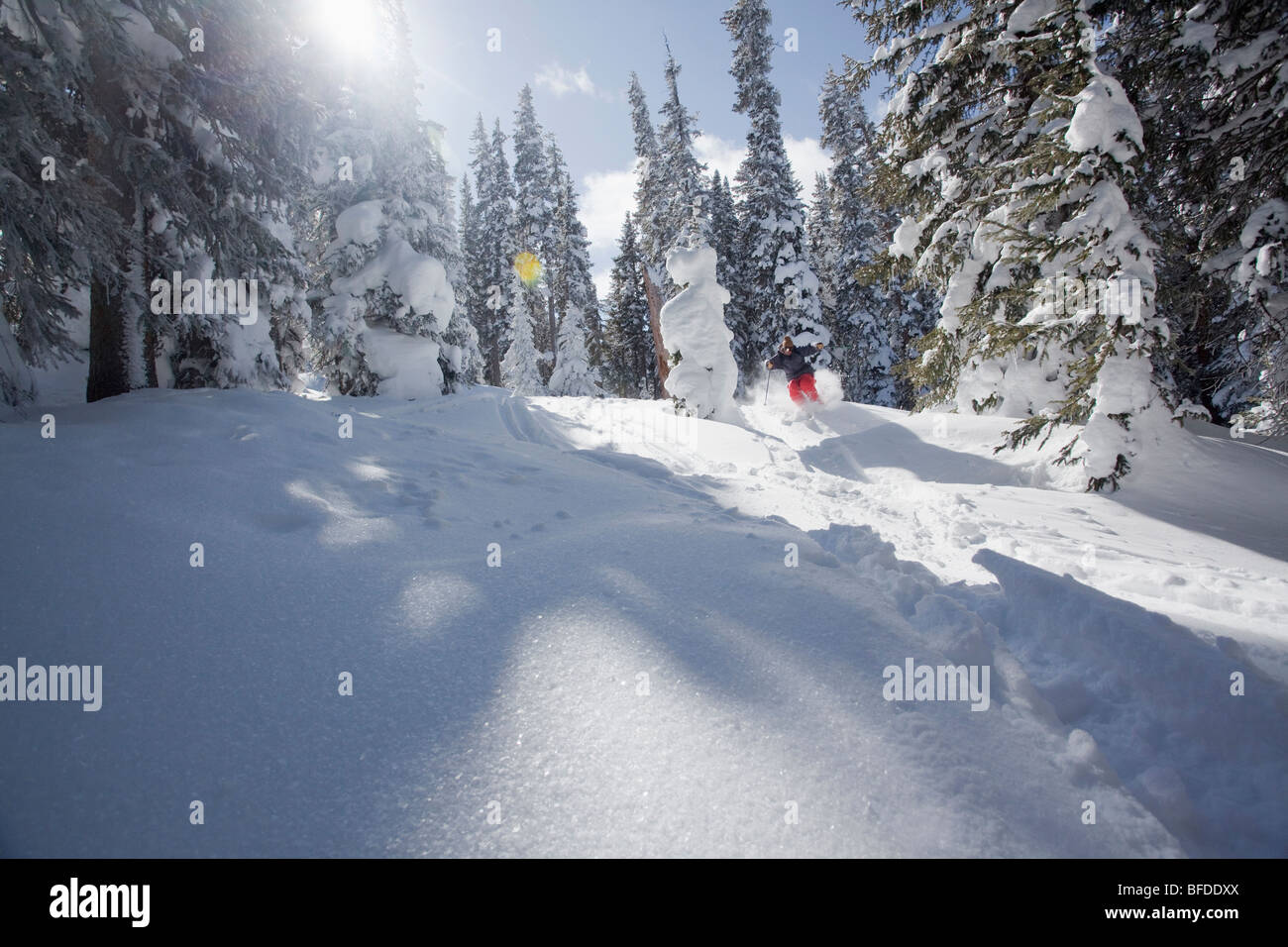 A back-lit skier flies through the trees in Vail, Colorado. - Stock Image
