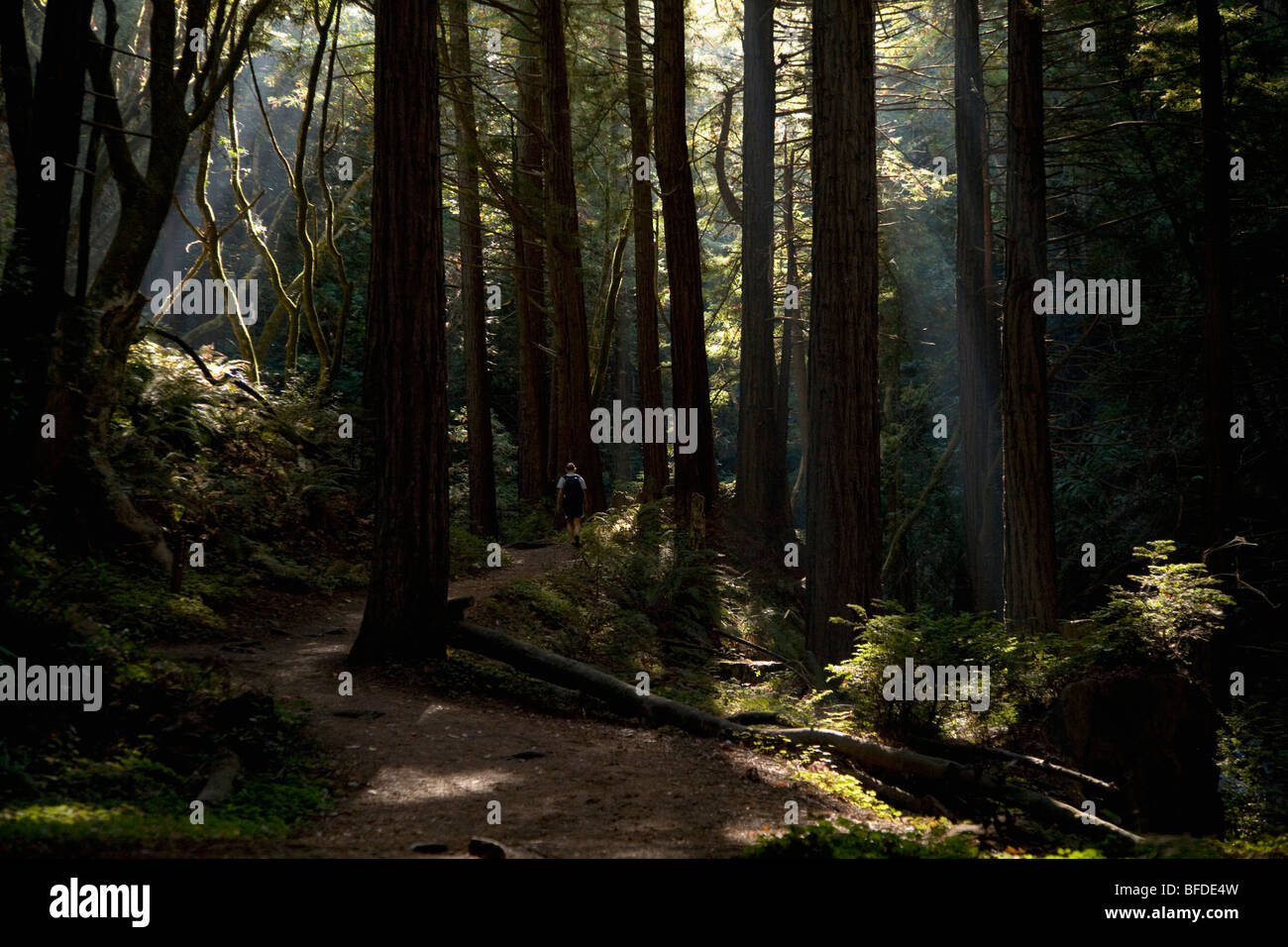 A women hiking a waterfall trail in Big Sur, California. - Stock Image